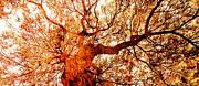 Juan Jose Espinoza - Tree Of Life