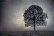 Tree Of Life Print by Scott Norris