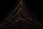 Tree Of Lights Print by Christi Kraft