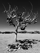 Dominic Piperata - Tree of lost Soles 2