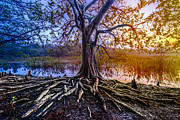 Tree Roots Photo Prints - Tree of Souls Print by Debra and Dave Vanderlaan
