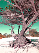 Tree On Beach Print by Julie Lourenco