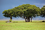 Horizon Art - Tree on savannah. Ngorongoro in Tanzania by Michal Bednarek