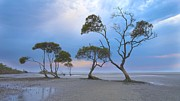 Cloudy Day Paintings - Tree on sea shore  by Lanjee Chee
