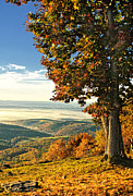 Bedford Hills Framed Prints - Tree Overlook Vista Framed Print by Timothy Flanigan