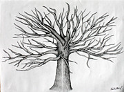 Pen And Ink Drawing Prints - Tree reaching  Print by Fred Miller