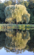 Adrienne Lattuca - Tree Reflection