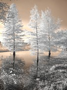 Fir Trees Posters - Tree Reflections Poster by Jane Linders