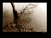 Tree Reflections On Sepia Print by Xoanxo Cespon