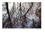 Tree Reflections On Tranquil Waters Print by Xoanxo Cespon