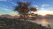 Sunrise Digital Art - Tree Romantic by Ralf Schreiber