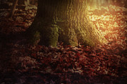 Forest Floor Digital Art Posters - Tree root Poster by Nikolina Petolas