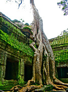 Tree Roots Digital Art Prints - Tree Roots Creep over Ta Prohm in Angkor Wat Archeological Park-Cambodia Print by Ruth Hager