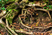 Simon Bratt Photography - Tree roots escaping