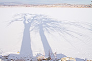James BO  Insogna - Tree Shadow Puppets