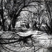 Michele Cornelius - Tree Shadow Vortex