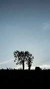 Backlit Prints - Tree Silhouette I Print by Marco Oliveira