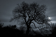 Tree Silhouette Print by Ian Mitchell