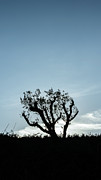 Senses Art - Tree Silhouette III by Marco Oliveira