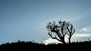 Backlit Prints - Tree Silhouette IV Print by Marco Oliveira