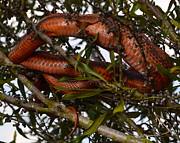 AnnaJo Vahle - Tree snake