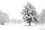 Frost Photos - Tree Standing In A Field Covered In Snow by Fizzy Image