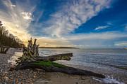 Nigel Hamer - Tree Stump Sunset