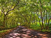 Dominic Piperata - Tree Tunnel at Hana Maui