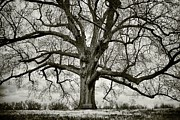 Evansville Photo Metal Prints - Tree with bench Metal Print by Greg Ahrens