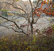 Frank Winters - Tree with Bridge