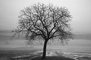 Tree Allee Framed Prints - Tree with fog Framed Print by Mats Silvan