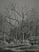 Janet Felts Drawings Metal Prints - Trees Along the Greenway Metal Print by Janet Felts