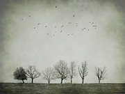 Monochrome Digital Art Posters - Trees and birds Poster by Diana Kraleva