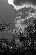 Clouds And Sun Posters - Trees and Clouds 3 BW Poster by Mary Bedy