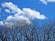 Blue And Brown Photos - Trees and Clouds by Sarah Loft