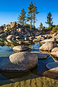Jamie Pham - Trees and Rocks