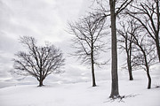 Daviess County Photo Metal Prints - Trees and Snow Metal Print by Wendell Thompson