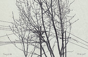 Wires Drawings Prints - Trees and Wires Print by Robert Tracy