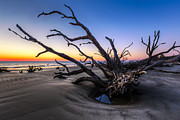 Trees At Driftwood Beach Print by Debra and Dave Vanderlaan