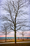 Leafless Prints - Trees at the Boardwalk in Toronto Print by Elena Elisseeva