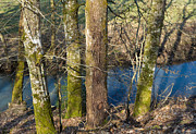 Brown Tones Photos - Trees at the river - beautiful brown green and blue colors by Matthias Hauser