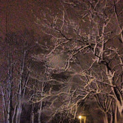 Snowy Night Photos - Trees by Betta Artusi