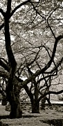 Corinne Rhode - Trees