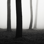 Repetition Prints - Trees dancing in the fog Print by Matteo Colombo