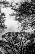 Framing Framed Prints - Trees Everywhere Framed Print by Hakon Soreide