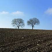 Plowed Framed Prints - Trees in a agricultural landscape. Framed Print by Bernard Jaubert