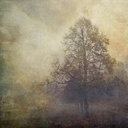 Wuppertal Posters - Trees in fall mist Poster by Dirk Wuestenhagen