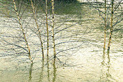 Martyn Williams - Trees In Flood Water