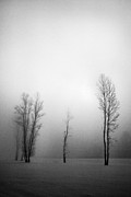 Winter Landscapes Framed Prints - Trees in mist Framed Print by Davorin Mance