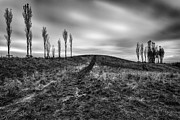 Britain Photos - Trees in mono by John Farnan